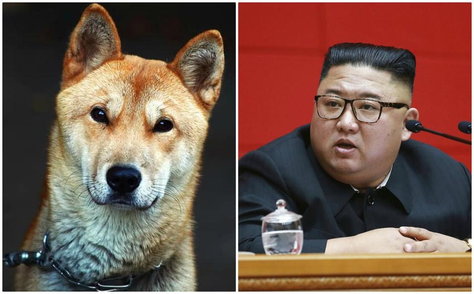 Kim Jong-un prohíbe los perros como mascota en Corea del Norte y los confisca para matarlos