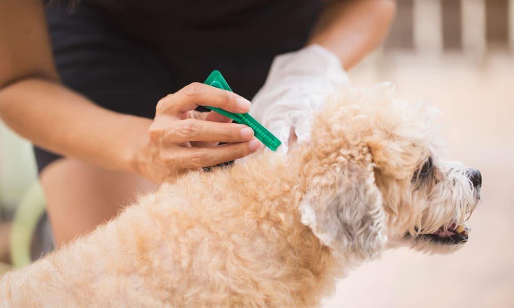 El uso de pipetas en perros