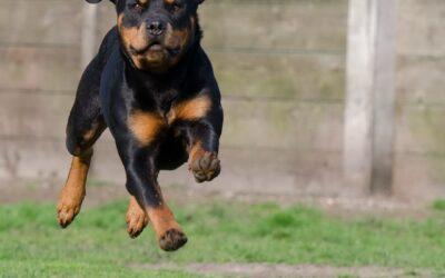 Medicamentos para articulaciones en perros