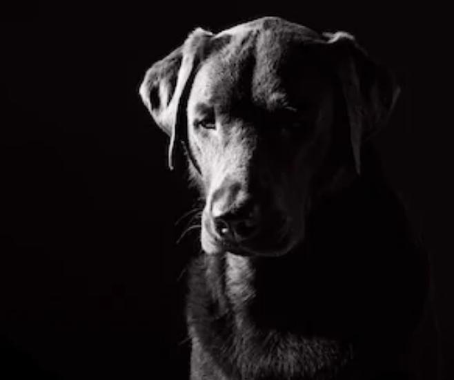 Ley que intensifica los castigos por maltratos a perros y gatos